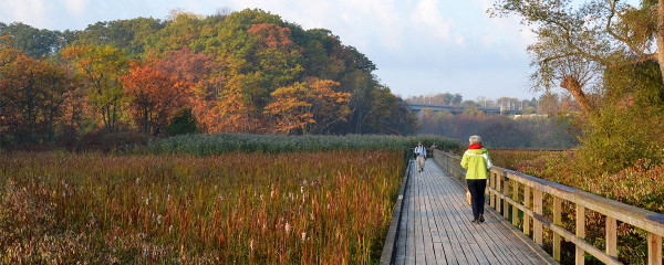 Image Credit: Cootes to Escarpment