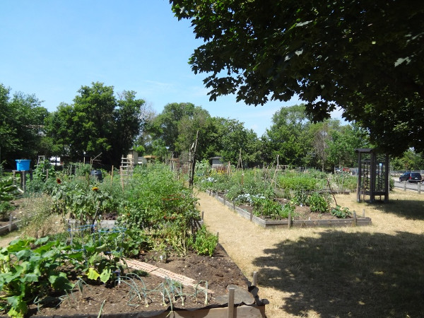 Hill Street Community Garden (RTH file photo)