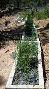 Gravel Reed Bed