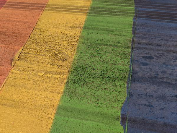Detail of rainbow crosswalk faded and covered in skid marks (Image Credit: Cameron Kroetsch)