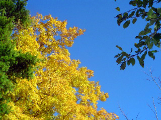 Leaves under a blue sky