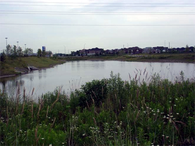 Wetlands at Appleby Ln. and Hwy. 5: an ideal spot for canoeing families