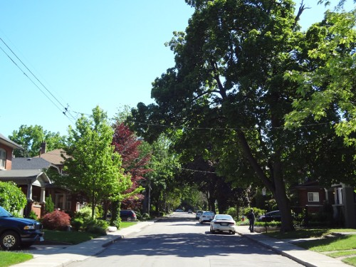 Tree canopy in southwest Hamilton (RTH file photo)