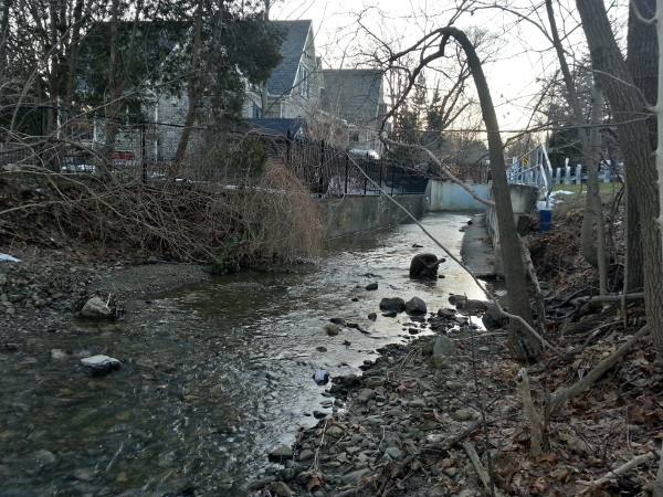 Sydenham Creek looking upstream along the south side of Alma Street